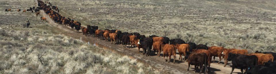 Beef Matters